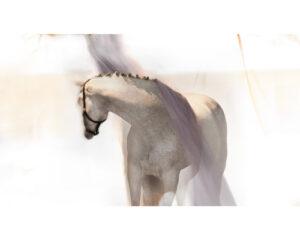 {Equestrian Life} Horse Power